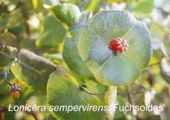 shrubs4