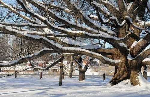 bebbs-winter