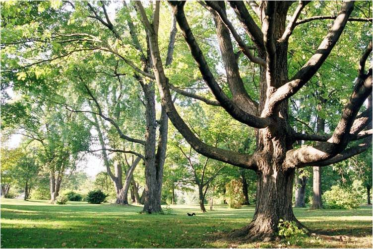 What does it mean to be a Native Tree?