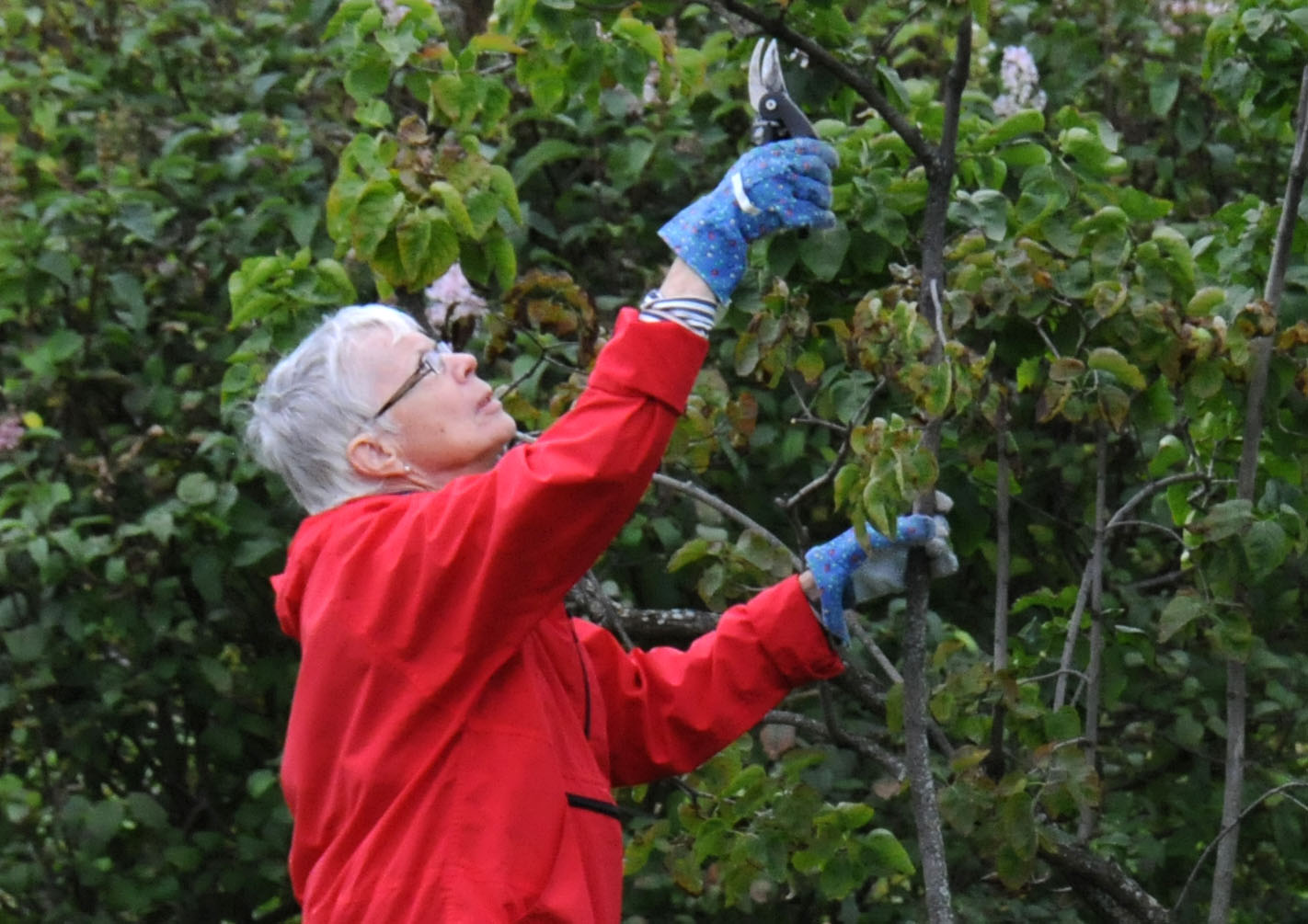Tree Growth and Pruning