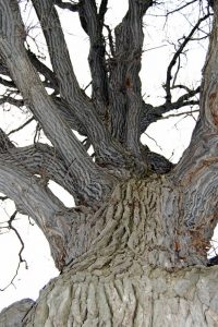 Non-green Parts of Trees: Bark, Branches and Roots