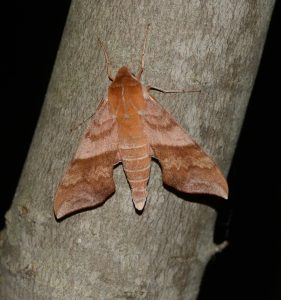 A Night With the Moths