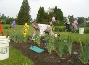 Iris and daylily garden team
