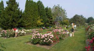 Rose garden team