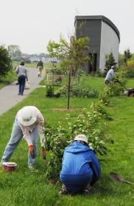 Shelterbelt garden team