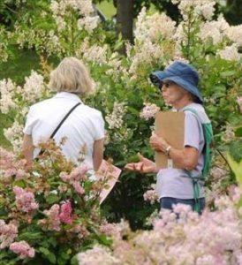 Lilac garden team