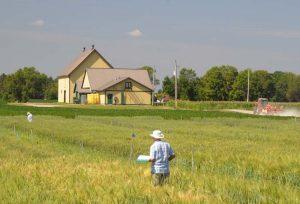 CEF research crops