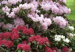 shrubs2