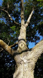 Endangered Trees and New Appearances