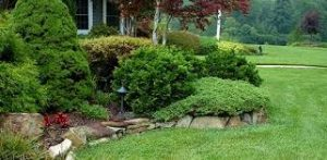 Trees and Shrubs- the Backbones of your Gardens